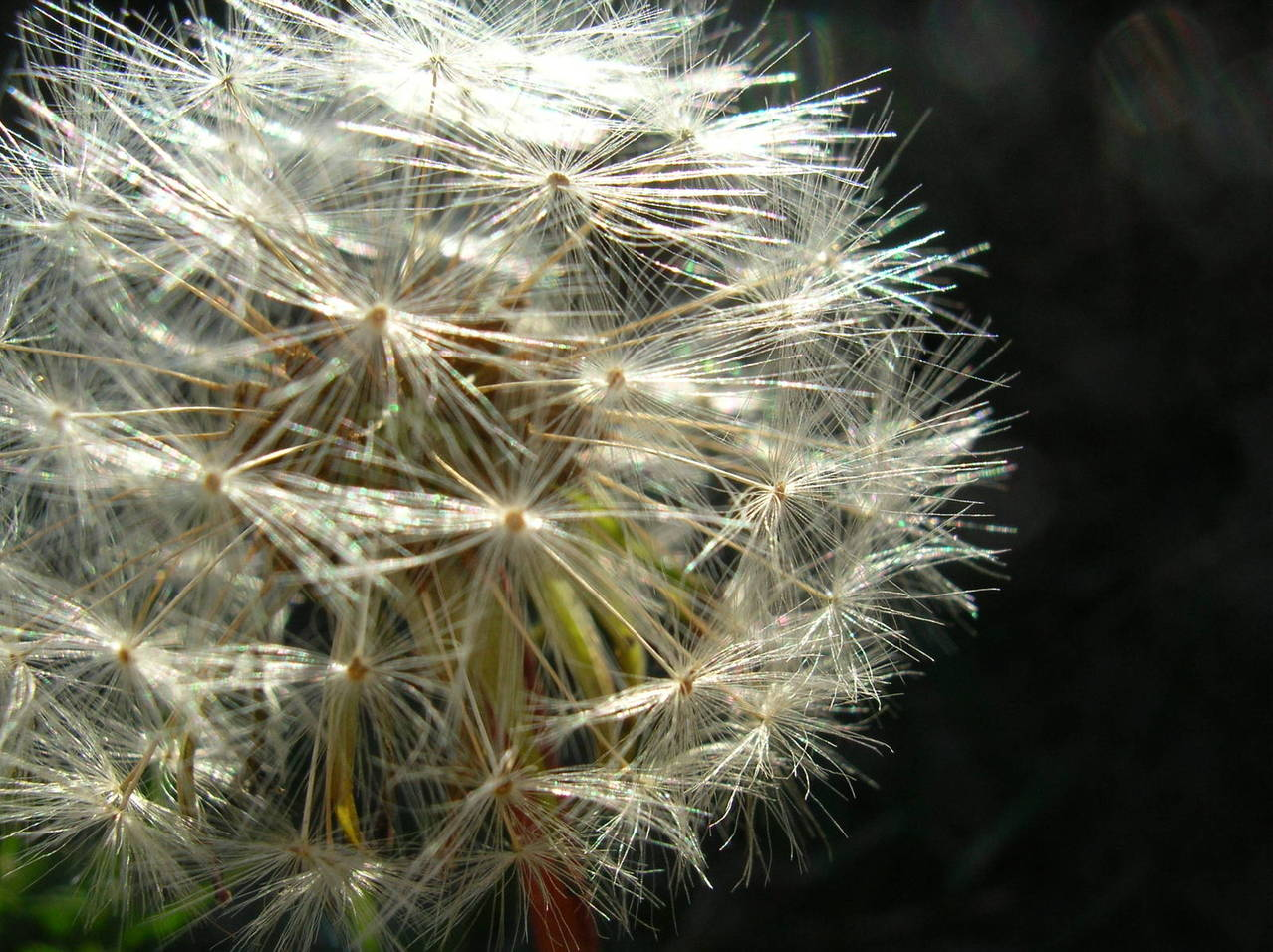 Objawy alergii skórnej