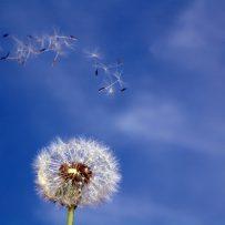 Leczenie alergii pokarmowej